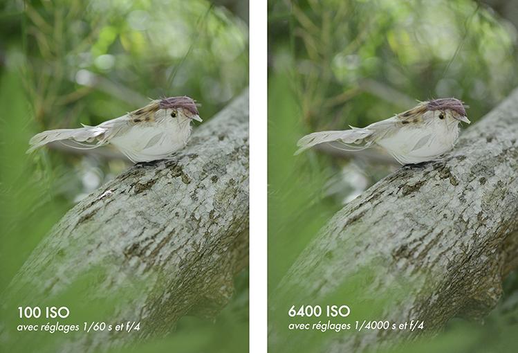 Oiseau_ISO