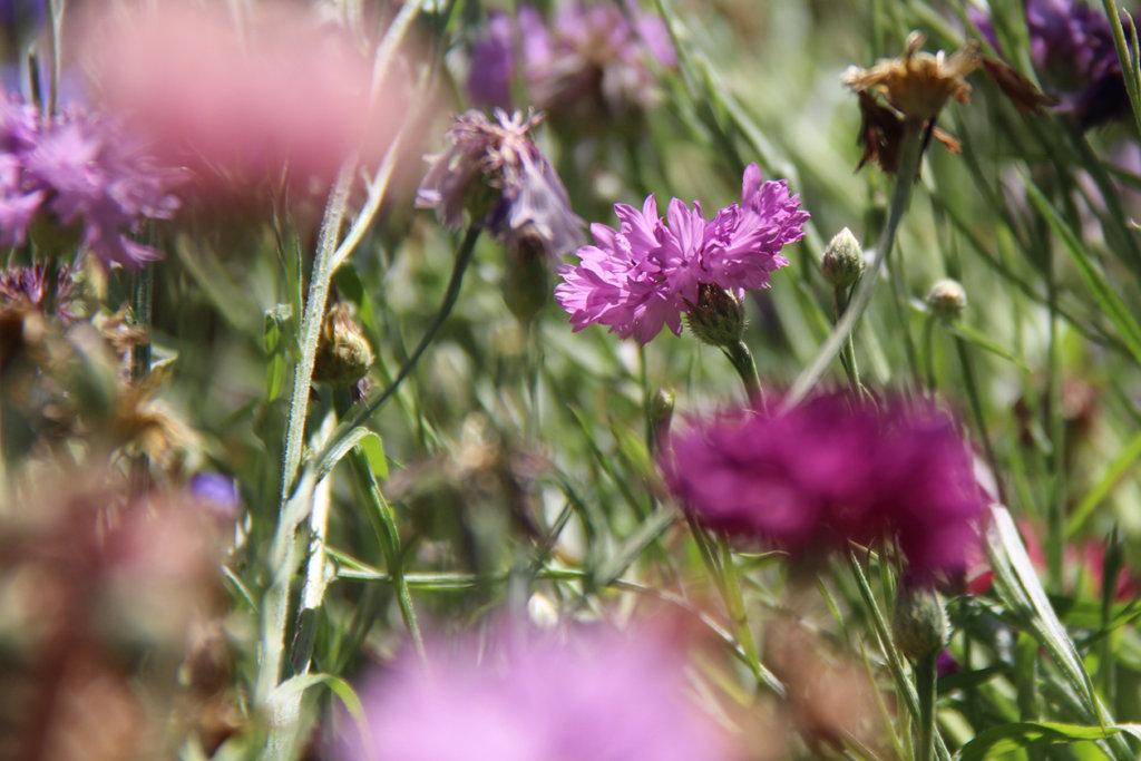 Profondeur de champ et fleurs
